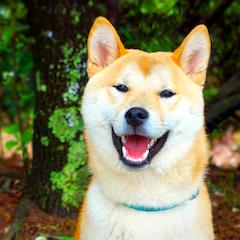 Прогноз Фэн-шуй на октябрь 2021 года – месяц Собаки
