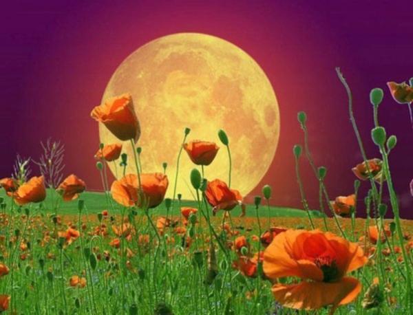 23 августа 2018 года –12 лунный день, символ дня – Сердце