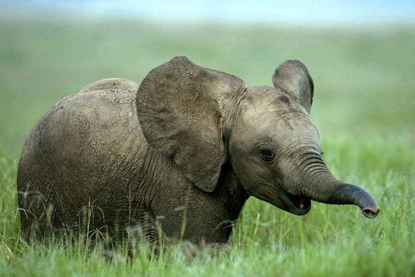 20 марта 2017 года – 22 лунный день, символ дня – Слон, Ганеша