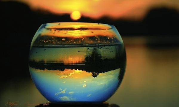 29 лунный день, символ дня – Гидра, Спрут